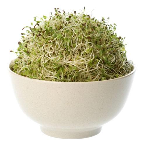 alfalfa consumo