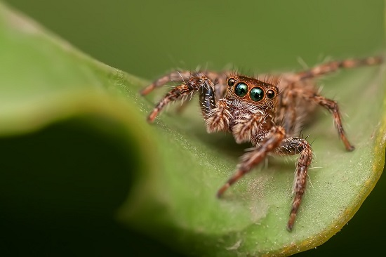 curiosidades arañas