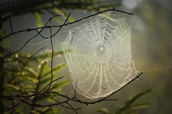 interpretacion de sueños arañas
