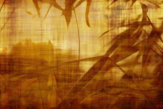El bambú como amuleto de la buena suerte