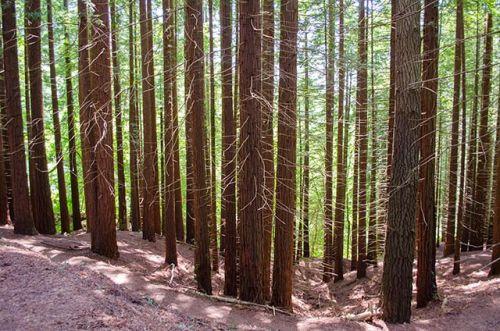 Secouyas del Monte Cabezón bosque