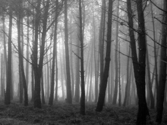 Brujas Reales - Bosque Black Hills