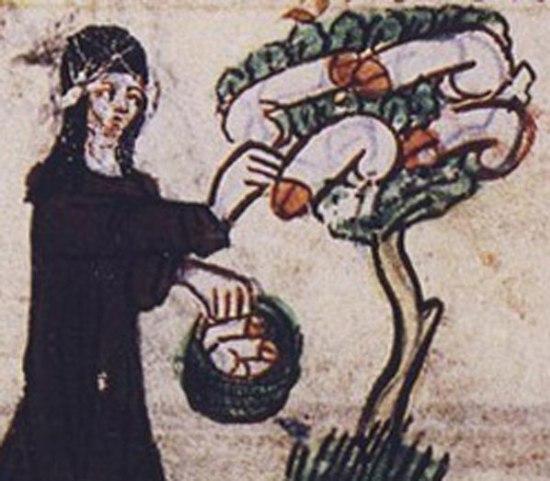 Brujas roba pene - Monja cosechando penes del árbol
