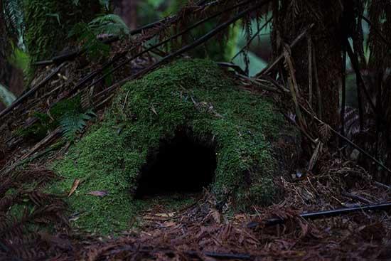 cueva niños verdes