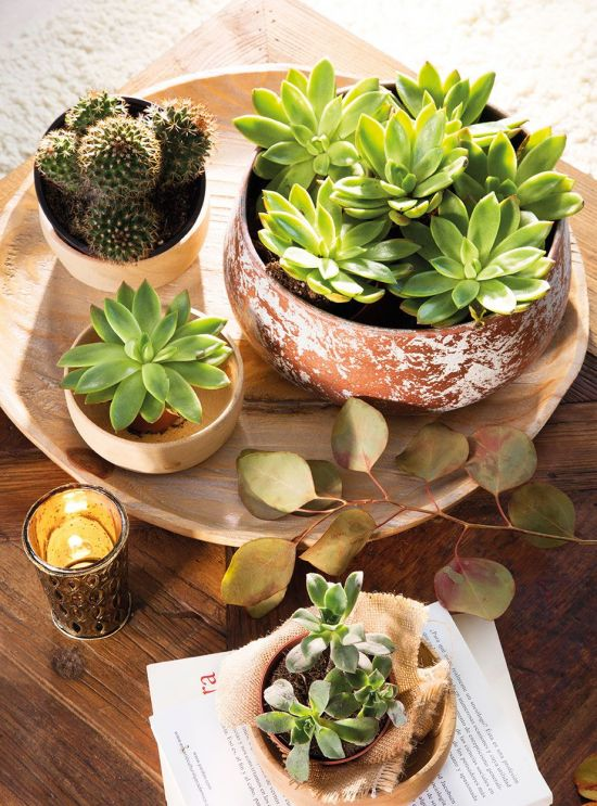 centros de mesa plantas resistentes