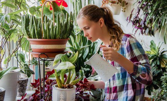 feng shui plantas beneficios