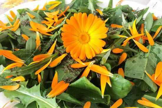 Flores comestibles - Ensalada con flores de Caléndula