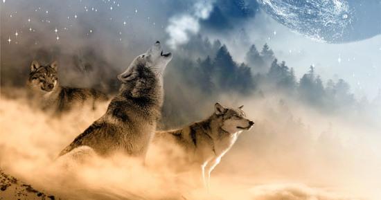 Lobo - Aullando