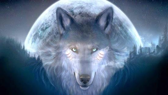 Lobo - Azul