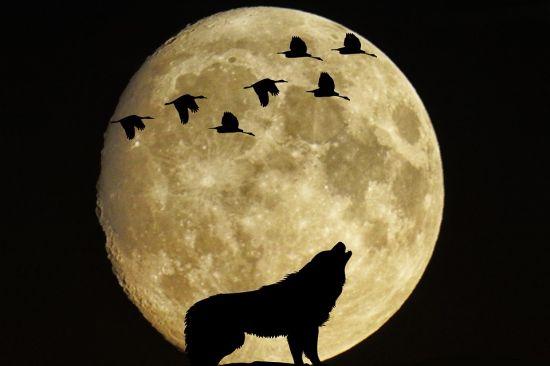 luna llena comportamientos alterados
