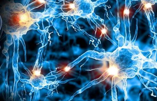 Memoria Celular - Neuronas