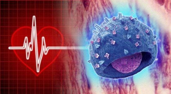 Memoria Celular - Corazón y cerebro