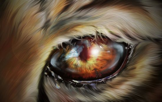 ojo de tigre poder