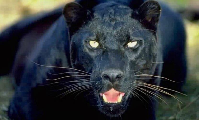 animales espirituales poderosos