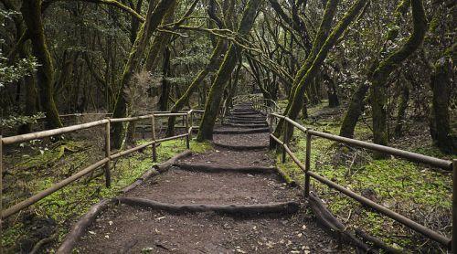 Parque Nacional de Garajonay bosque la gomera