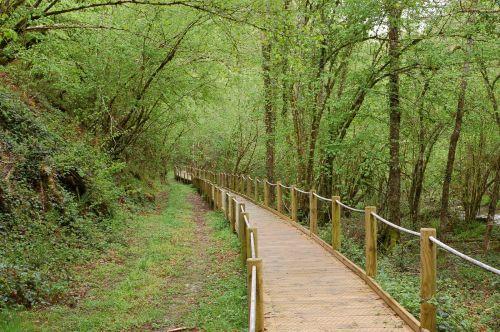 Reserva de Muniellos bosques espana