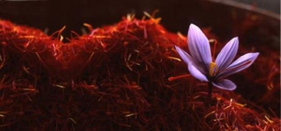 Rituales con Azafrán - Flor