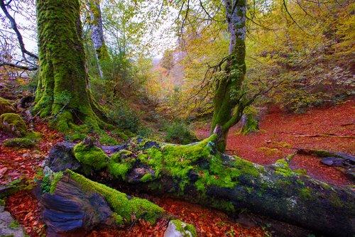 selva de irati bosque